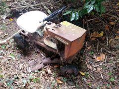 image my mowett mustang hedge find