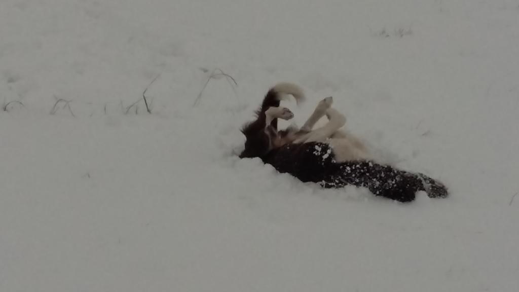 Irikah enjoying the snow.jpg